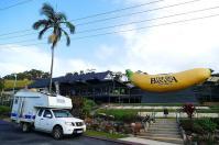 Willkommen im Australischen Bananenland. In der Gegend um Coffs Harbour wird ein Großteil der australischen Bananen angebaut.
