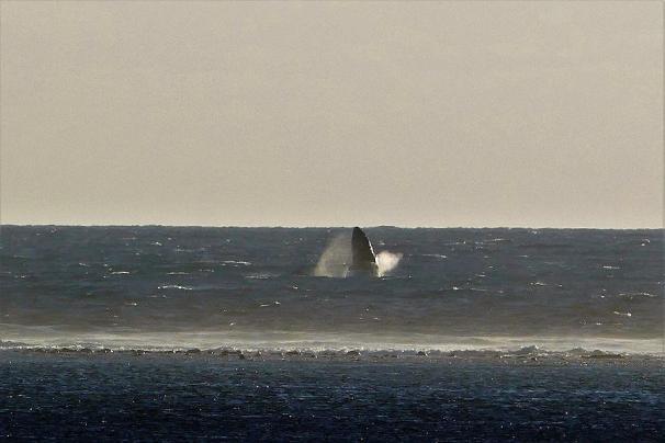 ... war Jörg für die Wale weiter draußen zuständig.