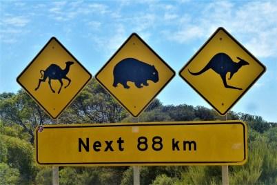 Alle auf einmal – eines der Standartstraßenschilder in Australien, wo auf die jeweilige Tierpopulation im nächsten Streckenabschnitt hingewiesen wird.