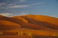 … unter anderem dieses Kamel durfte uns gleich in die Sahara bringen.