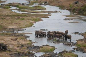 Eine Elefantenherde badet im Olifants River.