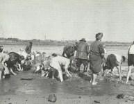 Kohlestücke aus Elbsand auswaschen