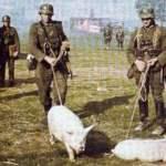 Wehrmacht Kriegsgliederung Oktober 1943