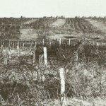 Kriegstagebuch 26. November 1916