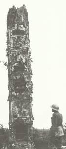 als zerschossenen Baumstamm getarnten deutschen Beobachtungsposten