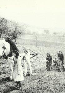 Landwirtschaft in Frankreich im 1. Weltkrieg