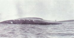 Selbstversenkung des Schlachtkreuzers 'Seydlitz'