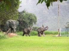 Elefanten Wasserälle