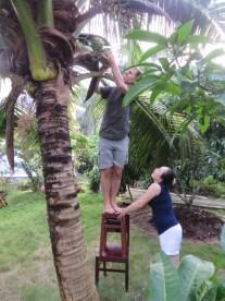 Kokosnuss pfluecken