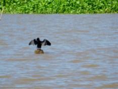 Mekongvogel
