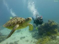 Aron und seine geliebtenSchildkröten! Die bubberblasen dahinter sind von Sandra