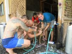Die Hunde werden gewaschen! ;-)