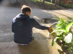 Aron freundet sich mit allen Hunden an!