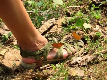 Die Schuhe waren naß weshalb die Schmetterlinge davon getrunken haben