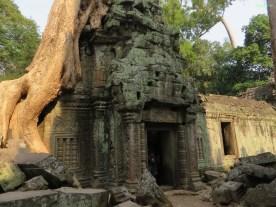 Wenn man die riesigen Bäume sieht, merkt man erst wie alt die Tempelanlagen wirklich sind.