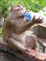 schlaue Affen
