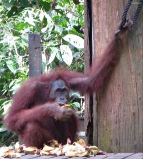 Sandakan / Sabah / Malaysia - 26.04.15