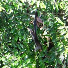 wieder ein riesen Einhörnchen