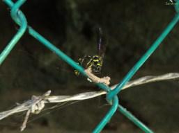 Fleißige Wespe