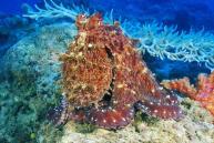 hübscher spiky Day Octopus