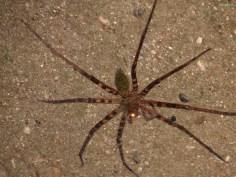 Spidertime
