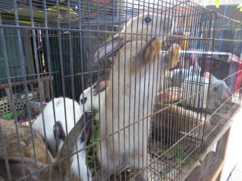 hier gibts so ziemlich jedes Tier im Käfig