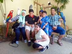 Vogelfamilienbild