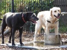 Lucy im Hundepark