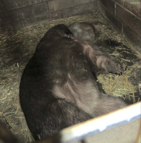chilling wombat