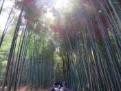 Im Bambushain