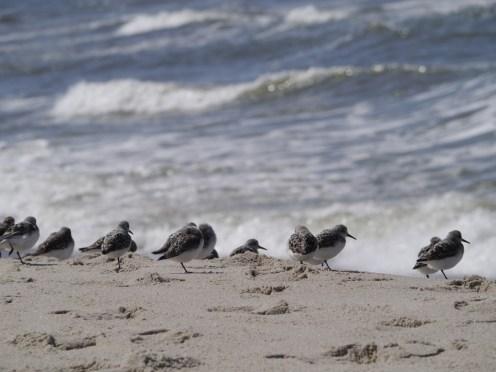 Vögel der Nordsee
