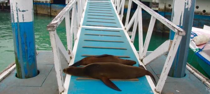 Galapagos-Inseln: Anreise mit Hindernissen