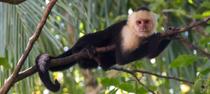 Manuel-Antonio-Nationalpark: wegen Überfüllung geschlossen