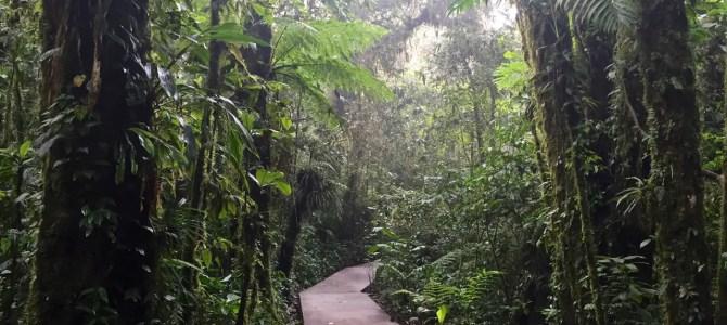Im Nebelwald von Santa Elena