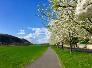 Radweg-nach-Riesa