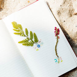 NATC Pressed Plant Journals 8.23.18 @ Nature At the Confluence