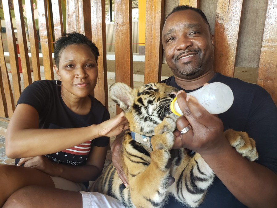 Thailand-Tiger