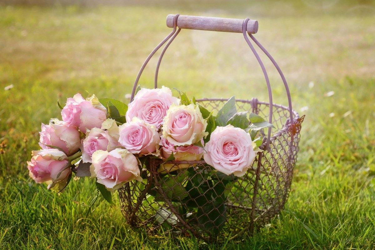 roses in a wire basket