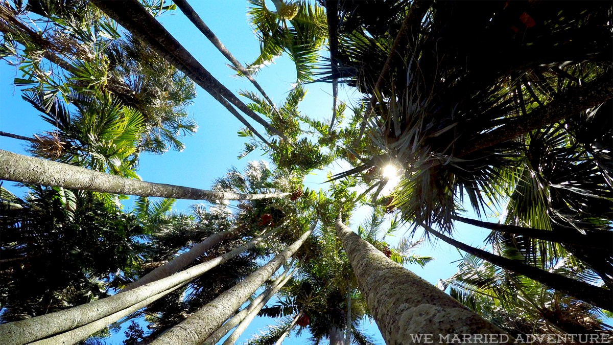 trees01_wm