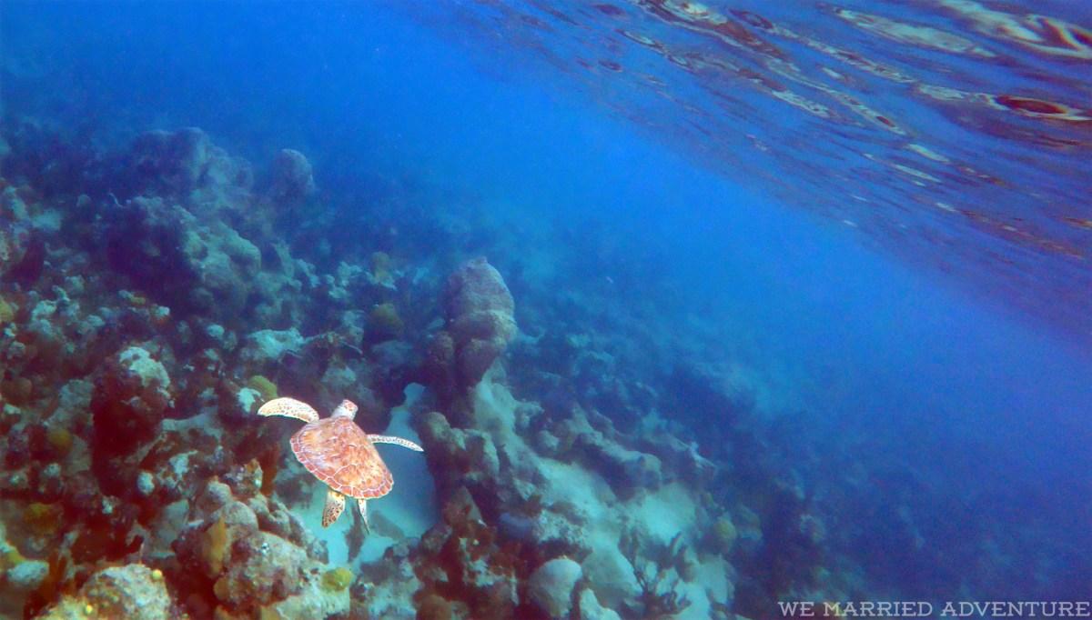 turtle_snorkel01_wm