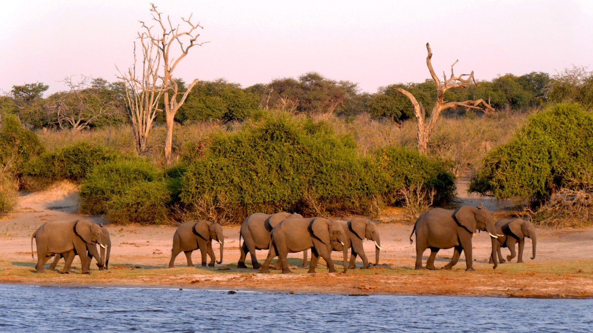 adventure-wildlife-herd-grazing-fauna-savanna-496658-pxhere.com