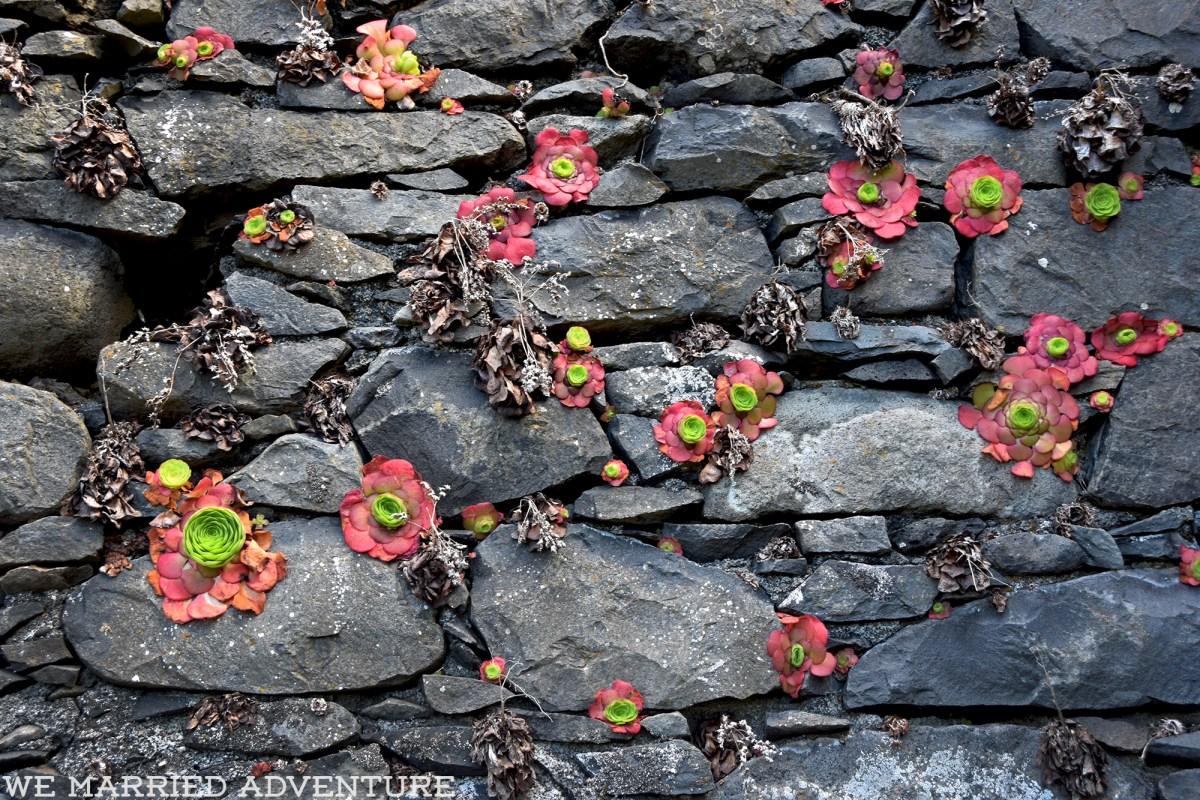 succulents01_wm