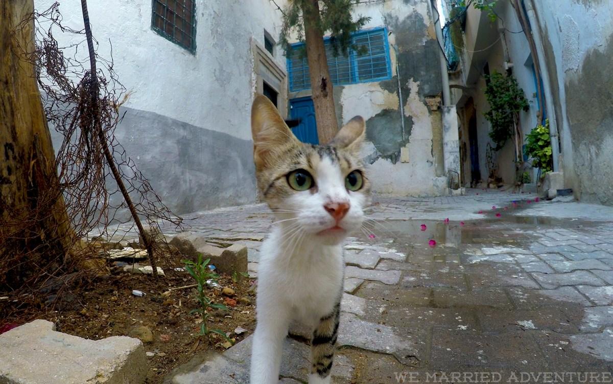 cat01_wm