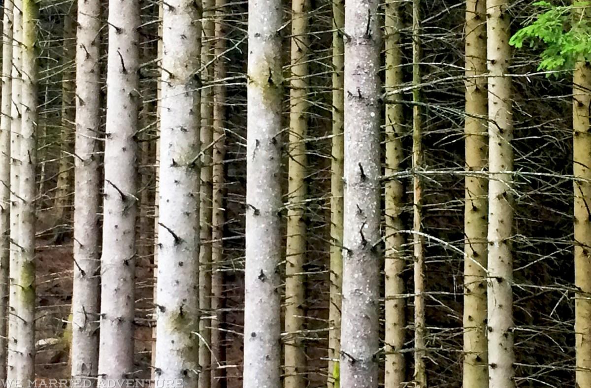 himakana_trees02_wm