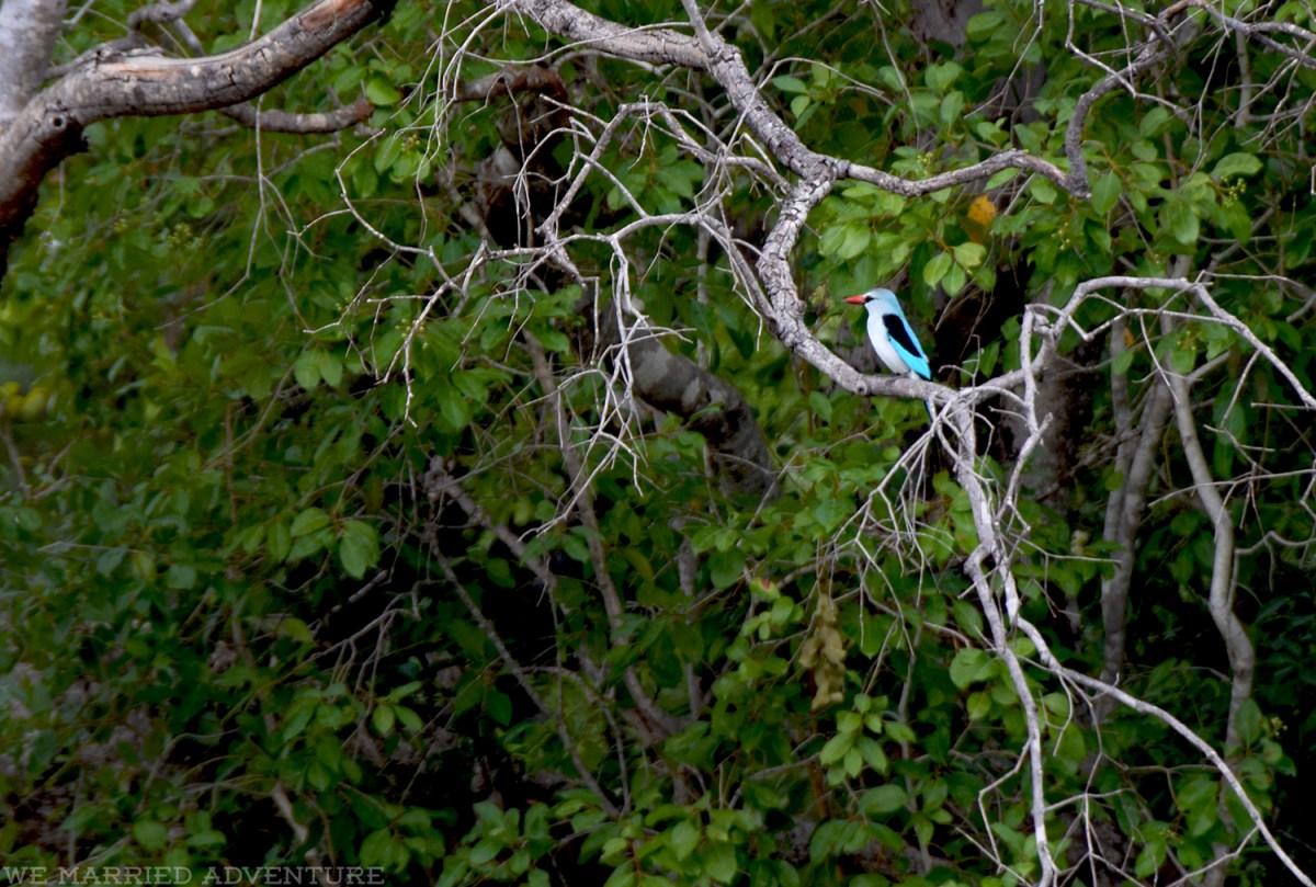 kingfisher01_wm