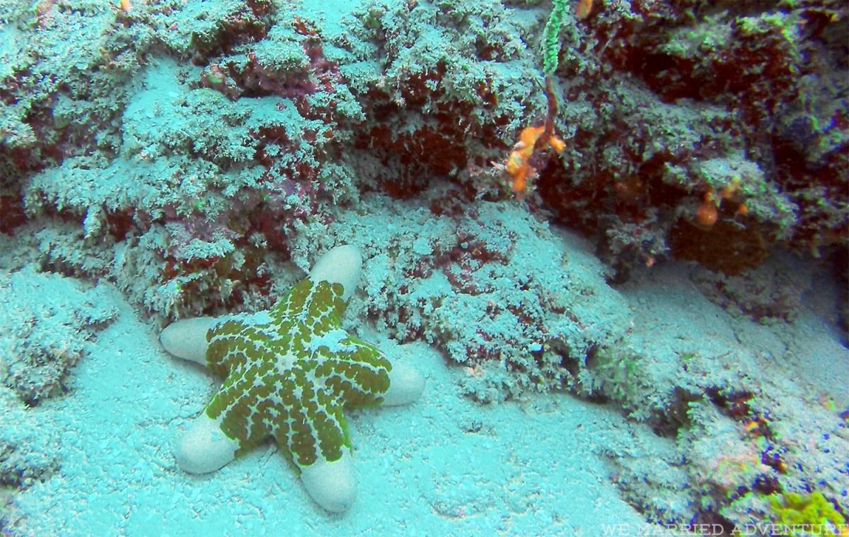 starfish01_wm