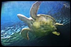 sm-turtle-aquarium