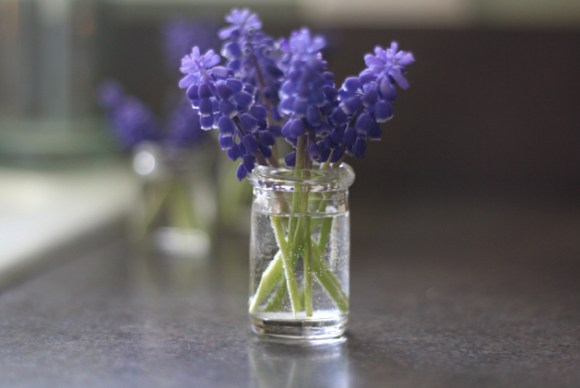 1-creamer-jar-grape-hyacinth