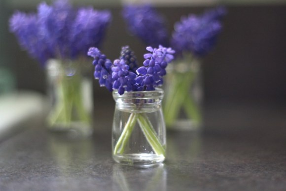 1-creamer-jar-in-front-grape-hyacinth