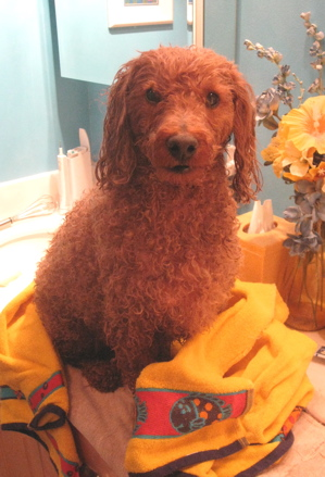 Drying off after the umteenth bath!